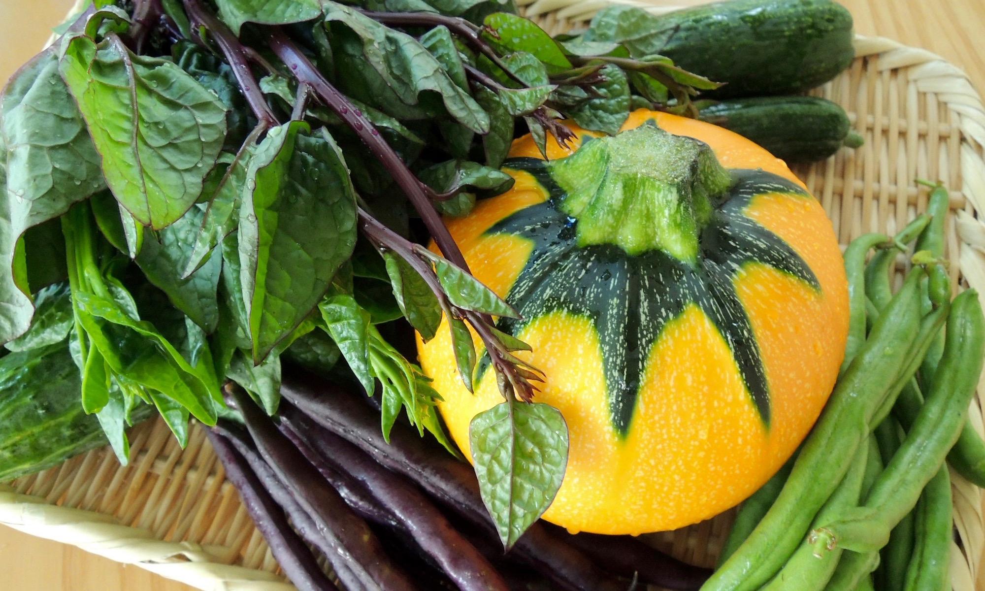 木村さん 自然農 野菜